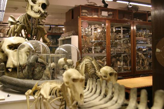grant-museum