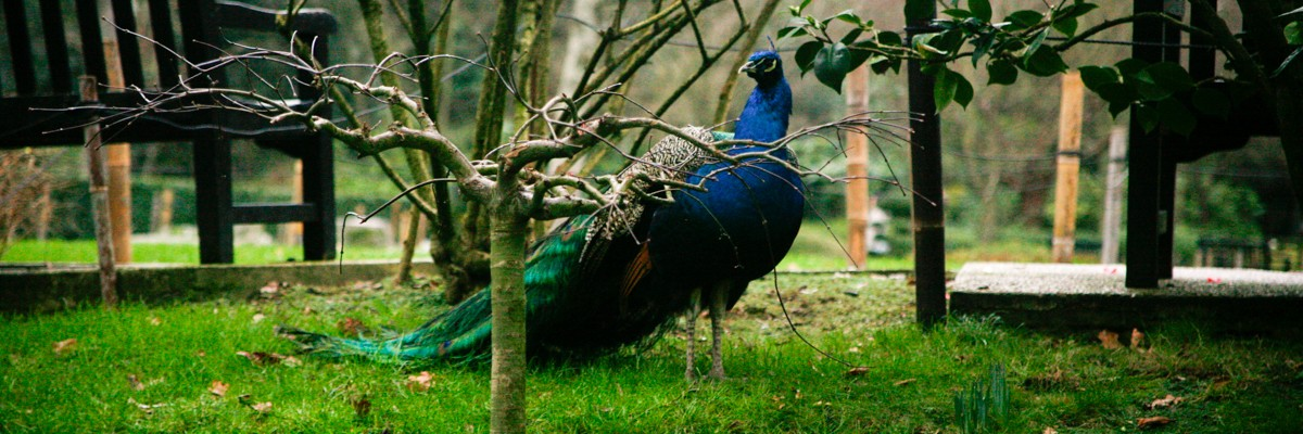 What to do in London - Holland Park
